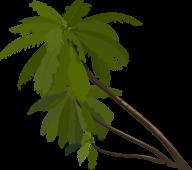 PalmTree PNG Free Download 13