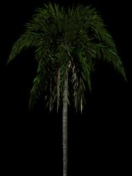 PalmTree PNG Free Download 21