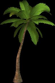 PalmTree PNG Free Download 3