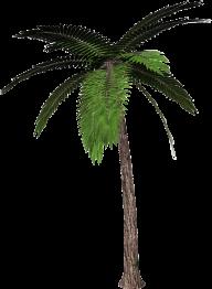 PalmTree PNG Free Download 9