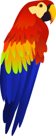 Parrot PNG Free Download 12