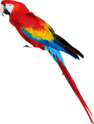 Parrot PNG Free Download 13