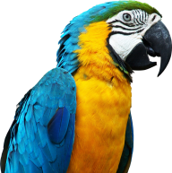 Parrot PNG Free Download 15