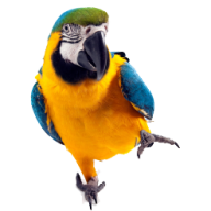Parrot PNG Free Download 16