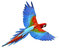 Parrot PNG Free Download 19