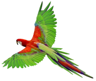 Parrot PNG Free Download 2