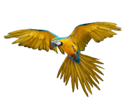 Parrot PNG Free Download 20