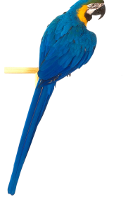 Parrot PNG Free Download 22