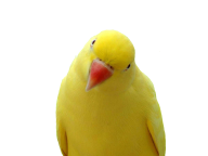 Parrot PNG Free Download 25