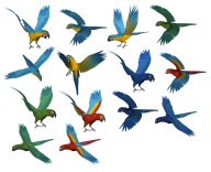 Parrot PNG Free Download 5