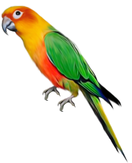 Parrot PNG Free Download 7