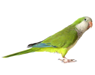 Parrot PNG Free Download 9