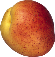 Peach PNG Free Download 10