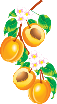 Peach PNG Free Download 12