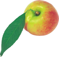 Peach PNG Free Download 16
