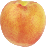 Peach PNG Free Download 19