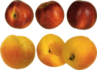 Peach PNG Free Download 26