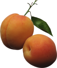 Peach PNG Free Download 4