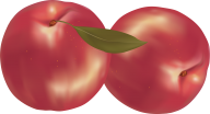 Peach PNG Free Download 59