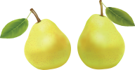 Pear PNG Free Download 10