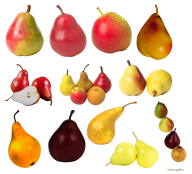 Pear PNG Free Download 27