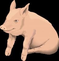 Pig PNG Free Download 18