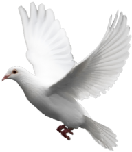 Pigeon PNG Free Download 18