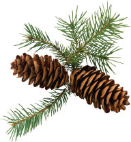 Pine Cone 3d Png Image