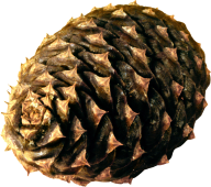 Pine Cone Dried Png