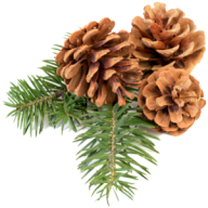 Pine Cone Icon Png Free
