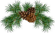 Pine Cone Illustrator Png