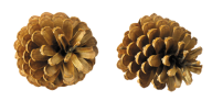 Pine Cone Png Download