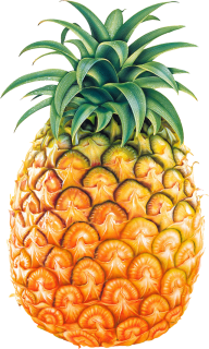 Pineapple PNG Free Download 17