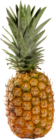 Pineapple PNG Free Download 20