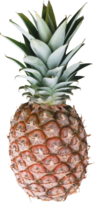Pineapple PNG Free Download 29