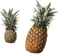 Pineapple PNG Free Download 6