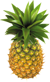 Pineapple PNG Free Download 8