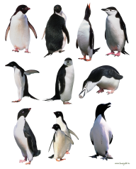 Pinguin PNG Free Download 1