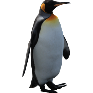 Pinguin PNG Free Download 12