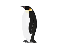 Pinguin PNG Free Download 3