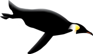 Pinguin PNG Free Download 6