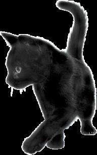 Playing Black Cat