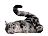 Playing Cat Png