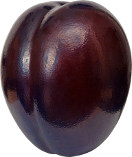 Plum PNG Free Download 1