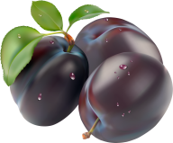 Plum PNG Free Download 15