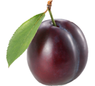 Plum PNG Free Download 16