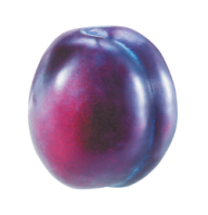 Plum PNG Free Download 18