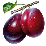 Plum PNG Free Download 23