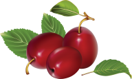 Plum PNG Free Download 3