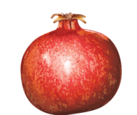 Pomegranate PNG Free Download 15